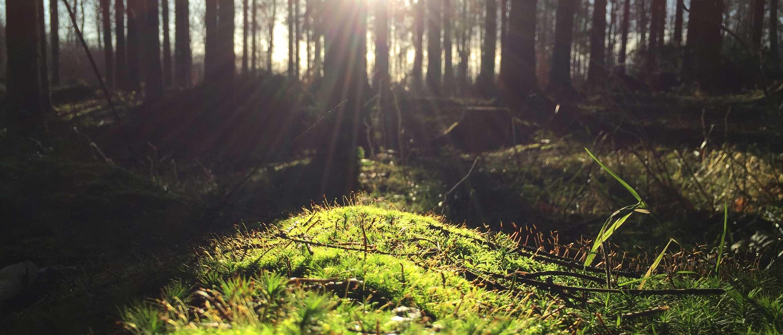 okoliš-certifikati-sunčana-livada-u-šumi