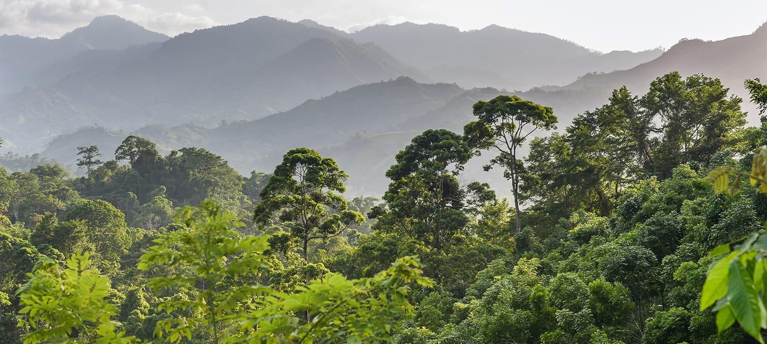 Honduras-prašuma-spremnik-tinte-recikliranje