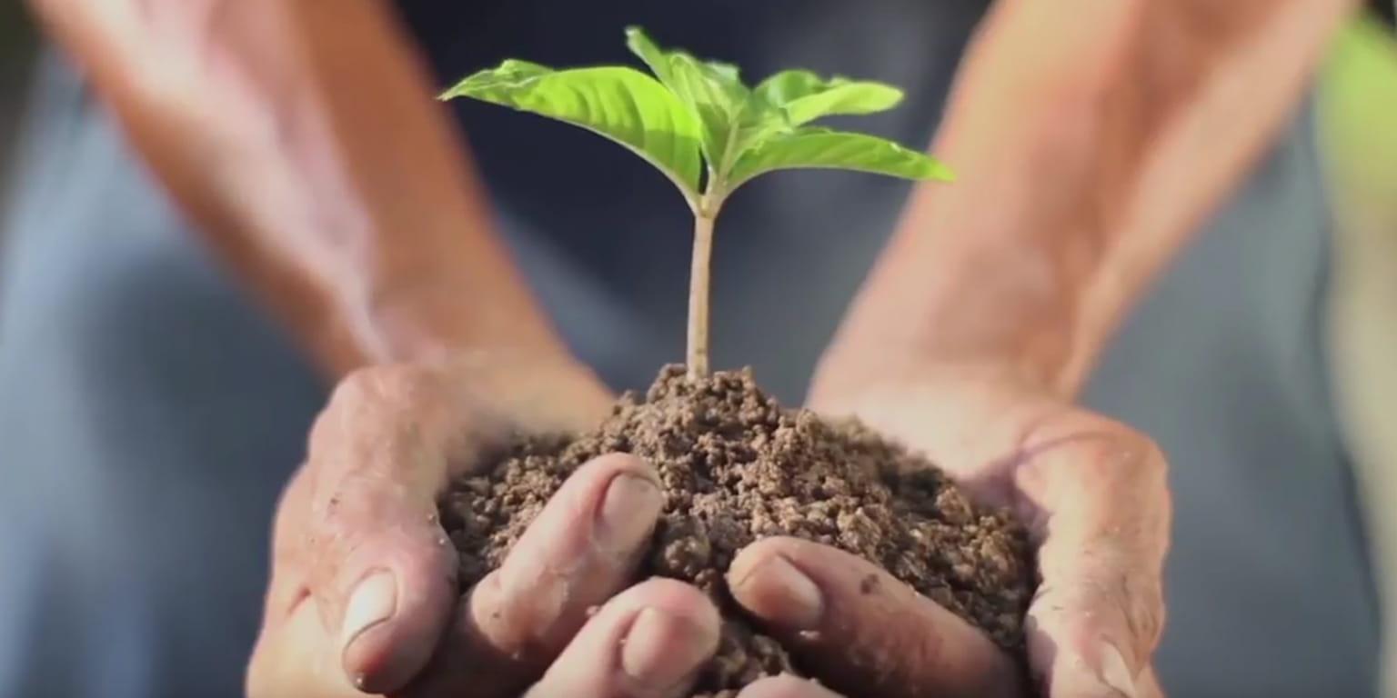 Recikliranje-osoba drži u dlanovima biljku u zemlji